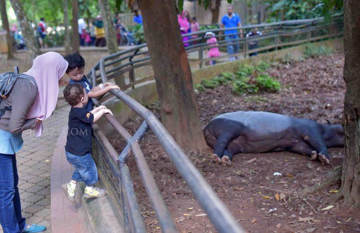Melaka Zoo & Night Safari