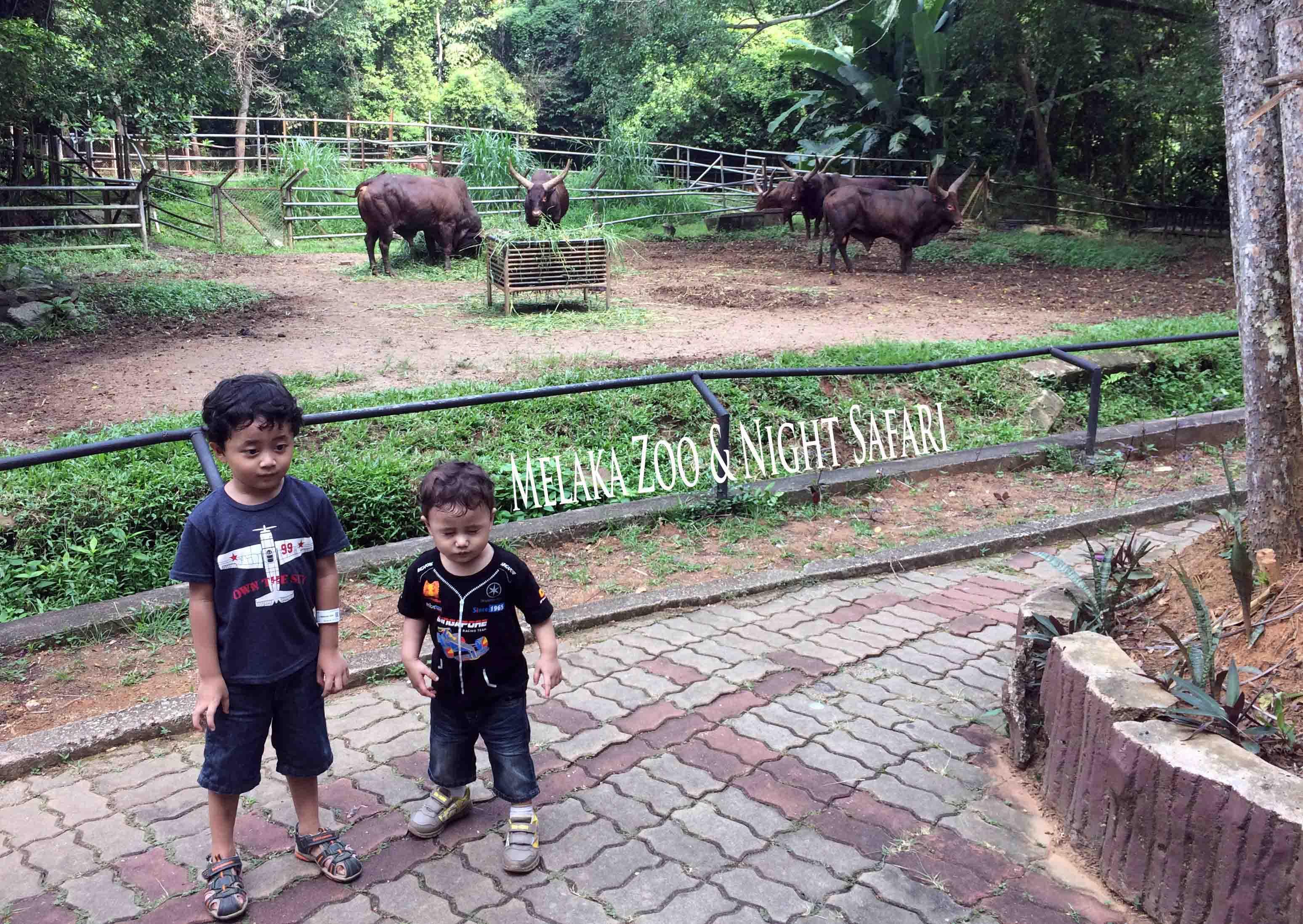 Pengalaman Dayyan & Danish di Melaka Zoo & Night Safari