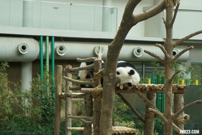 national zoo malaysia panda